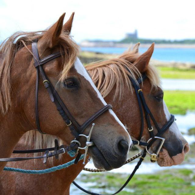 chevaux au gite a la ferme le clos giot